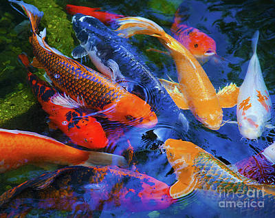 Photograph - Calm Koi Fish by Jerry Cowart