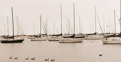 Calm Sail Art Print