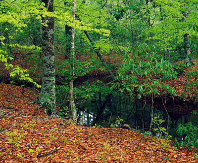 Fallen Leaf Photograph - Calm Stream Through Beech And Magnolia by Panoramic Images
