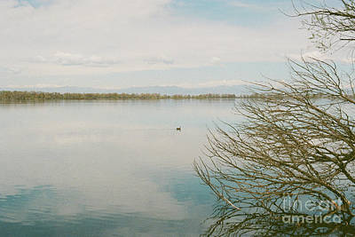 Photograph - Calm Tranquility by Ana V Ramirez