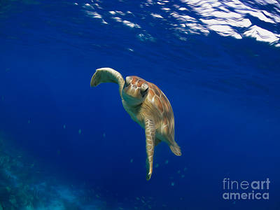 Alejandro Gutierrez Photograph - Deep Blue Calm by Athoyo
