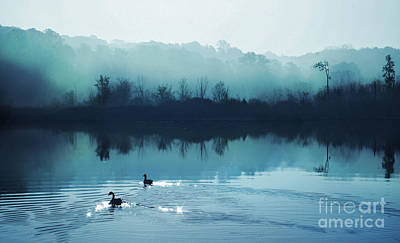 Calming Water Art Print by Gina Signore