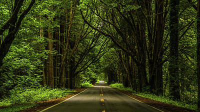 Photograph - Calofnia's Avenue Of The Giants by TL Mair