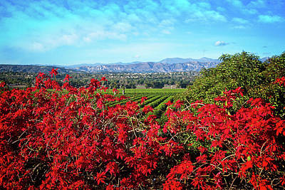 Photograph - Camarillo Christmas by Lynn Bauer