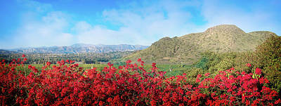 Photograph - Camarillo Christmas Poinsettia Panorama by Lynn Bauer