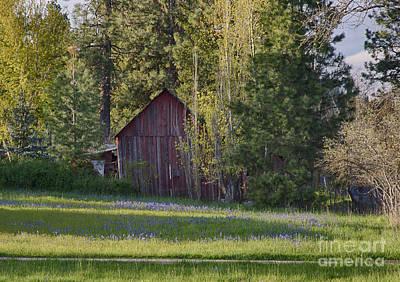 Photograph - Camas And Barn by Idaho Scenic Images Linda Lantzy