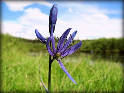 Photograph - Camas Flower by Leah Grunzke