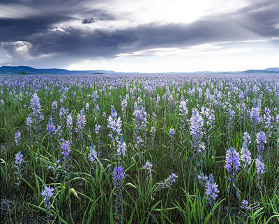 Photograph - Camas Marsh 2 by Leland D Howard