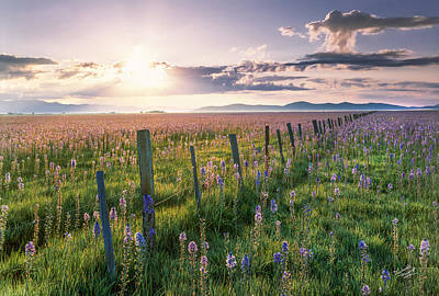 Photograph - Camas Marsh 3 by Leland D Howard