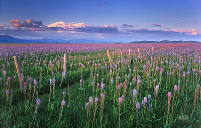 Photograph - Camas Prairie by Leland D Howard