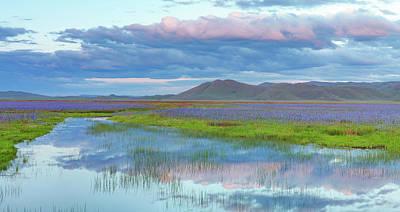 Photograph - Camas Purple And Blue by Leland D Howard