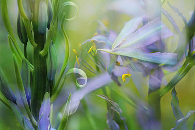 Photograph - Camas Quill Art  by Connie Handscomb