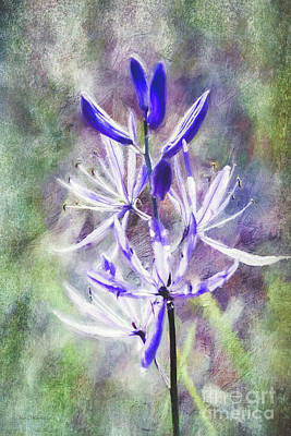 Photograph - Camassia Wildflower by Jean OKeeffe Macro Abundance Art
