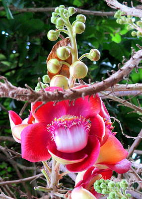 Photograph - Cambodia Flower 2 by Randall Weidner