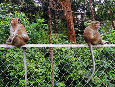 Photograph - Cambodia Monkeys 1 by Ron Kandt