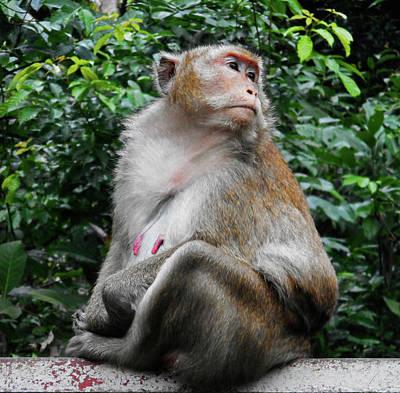 Photograph - Cambodia Monkeys 2 by Ron Kandt