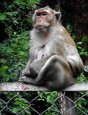 Photograph - Cambodia Monkeys 3 by Ron Kandt