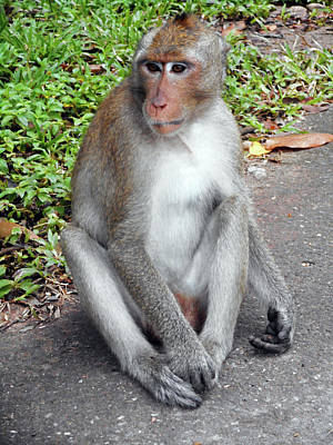 Photograph - Cambodia Monkeys 4 by Ron Kandt