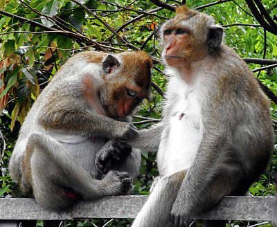 Photograph - Cambodia Monkeys 6 by Ron Kandt