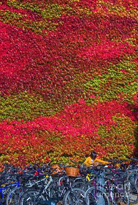 Cambridge Photograph - Cambridge Autumn  by Andrew Michael