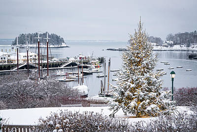 Photograph - Camden Harbor Christmas Tree by Benjamin Williamson