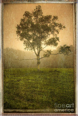 Photograph - Camden Tree Fog In The Meadow by Craig J Satterlee