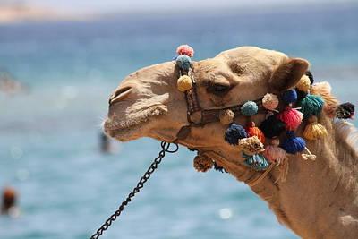 Camel By The Sea Art Print by Tawfik W Dajani