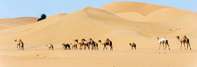 Camel Caravan, Dubai Original by David GABIS