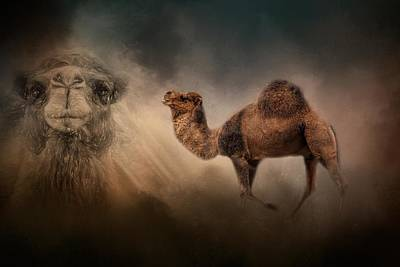 Camel In The Spotlight With Pencil Art Print
