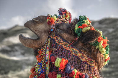 Turkish Photograph - Camel by Joana Kruse