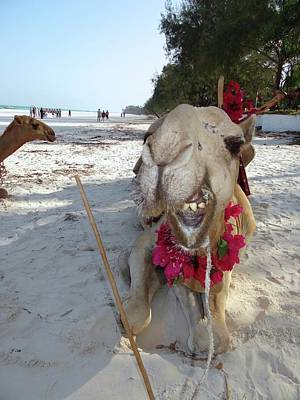 Exploramum Photograph - Camel On Beach Kenya Wedding2 by Exploramum Exploramum