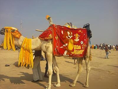 Jerry Photograph - Camel On The Beach by Vivek Raj