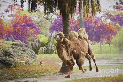 Painting - Camel On The Move by Judy Kay