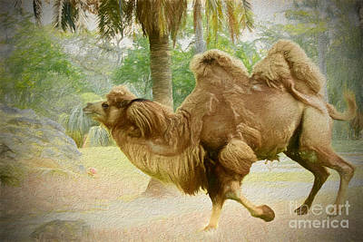 Painting - Camel On The Run by Judy Kay