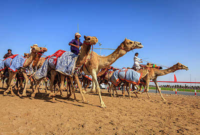 Photograph - Camel Racing In Dubai by Alexey Stiop