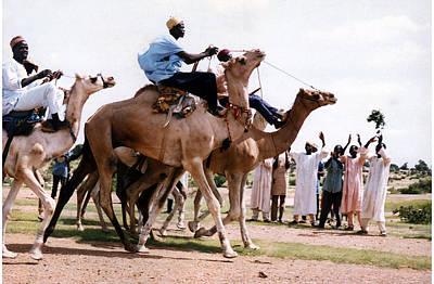 Photograph - Camel Racing-warming Up by Muyiwa OSIFUYE