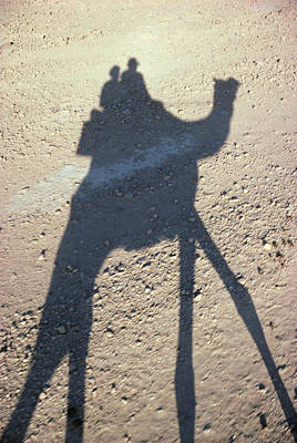 Photograph - Camel Shadow by Gloria & Richard Maschmeyer - Printscapes