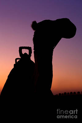 Sahara Photograph - Camel Silhouette In Dubai by Fototrav Print