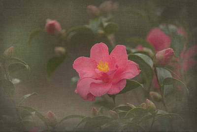 Photograph - Camelia by Angie Vogel