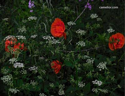 Photograph - camelior.com Poppies by Jacqueline Madden