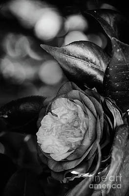 Photograph - Camellia Black And White 2 by Andrea Anderegg