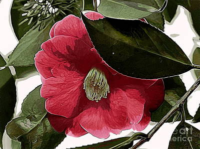 Photograph - Camellia Bloom by Erica Hanel