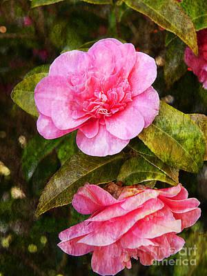 Photograph - Camellia Conversation by Brenda Kean