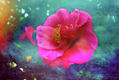 Photograph - Camellia Dreams by Kay Brewer