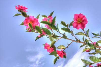 Camellia Art Print by Elaine Teague