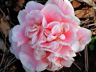 Camellia Flower Art Print by Susanne Van Hulst