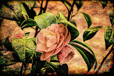 Camellia Photograph - Camellia Grunge by Kay Brewer