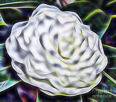 Photograph - Camellia In Fractal by D Hackett