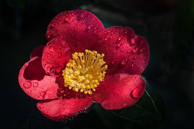 Camellia Photograph - Camellia In Rain by Catherine Lau