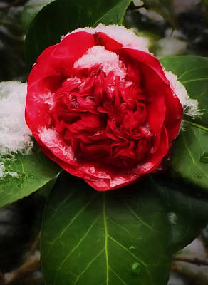 Photograph - Camellia With Snow by Shirley Radabaugh